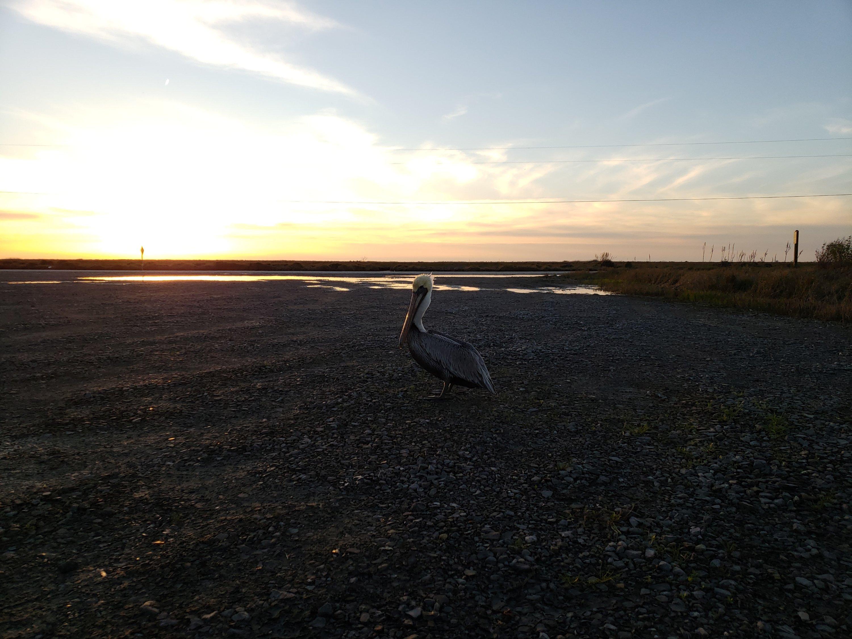 Birding, Louisiana, Travel Tips, Free Camping,Wildlife Refuge, Vanlife
