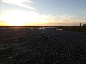 Birding, Louisiana, Travel Tips, Free Camping,Wildlife Refuge, Vanlife
